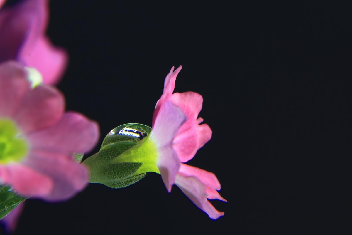 お題目。。。花を撮る