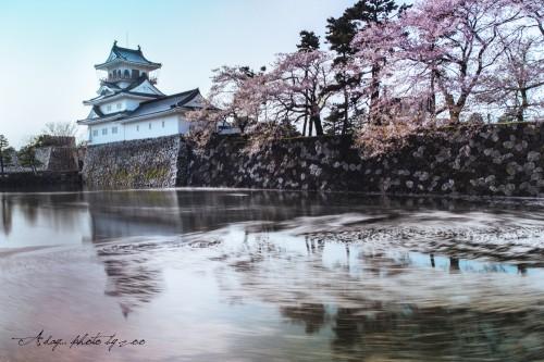 富山城と桜